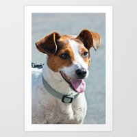 jack russell Art Prints featuring Jack Russell by Doug McRae