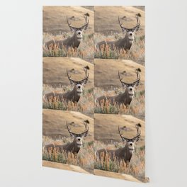 Mule Deer #01 Wallpaper