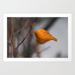 Lone Fall Leaf Art Print