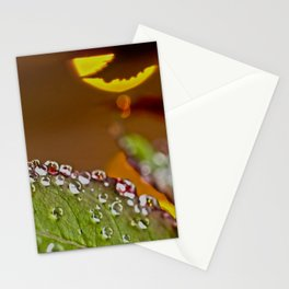 Leaf of rose in rain and evening sun Stationery Cards