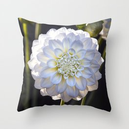 Dahlia / In The Garden / 16 Throw Pillow