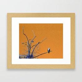 Watching You Like A Hawk Framed Art Print