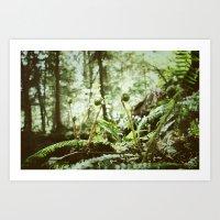 fiddleheads // west coast Art Print