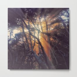 One of my favorite images...light streaming through a grove at Pt. Lobos Metal Print