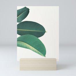 Rubber Fig Leaves II Mini Art Print
