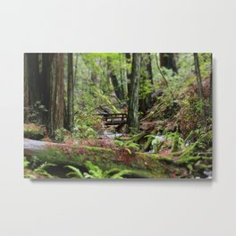 Peaceful Redwood Forest Scene Metal Print