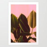Rubber Plant Art Print
