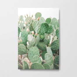 Cactus Flowers Pink And Green Desert Life Metal Print