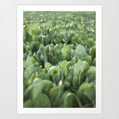 Green Textures - Food - Vegetables - south - Italy - puglia - apulia - mediterranean Art Print