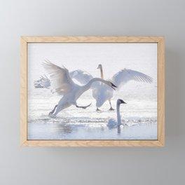 Trumpeter Swan Drama Framed Mini Art Print