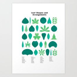 Leaf Shapes and Arrangements in Detail Art Print