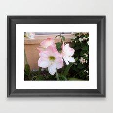 My Aunt's Flowers 1  Framed Art Print
