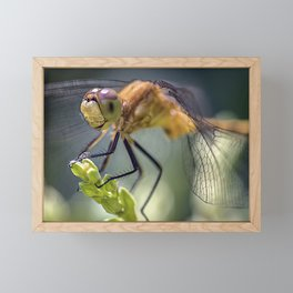 Dragonfly Closeup Framed Mini Art Print
