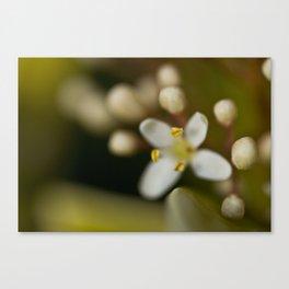 Blossom budding Canvas Print