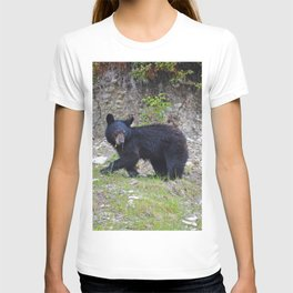 Young black bear munches on a dandelion in Jasper National Park T-shirt