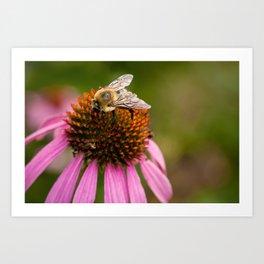 Bee Macro Art Print