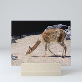 Alpaca the Case Mini Art Print