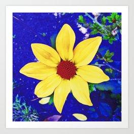 Dahlia in Candie Gardens Art Print