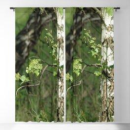 Birch Trees Blackout Curtain