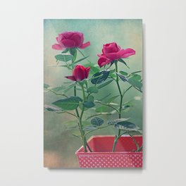 Pink roses in a pot Metal Print