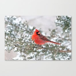 Winter's Beauty Cardinal Canvas Print
