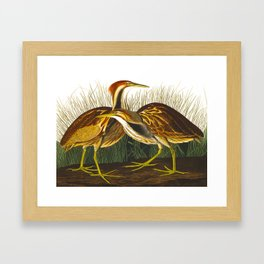 American Bittern Vintage Bird Art Framed Art Print