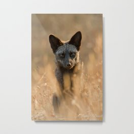 Grandma's Cove Fox Metal Print