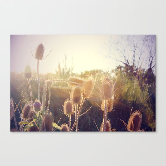 Beautiful sun Canvas Print