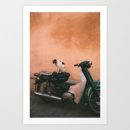 Cat in Marrakech Art Print