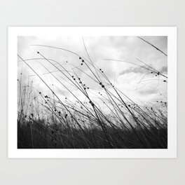 Grass by the sea - black and white moody art Art Print