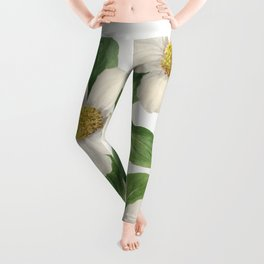 Pacific Dogwood (Cornus nuttallii) (1933) by Mary Vaux Walcott Leggings