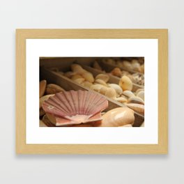 Conchiglie - Matteomike Framed Art Print