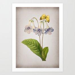 Vintage Canterbury Bells Botanical on Parchment Art Print