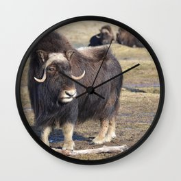 Arctic Muskox Wall Clock