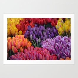 Colorful bunches of tulips Art Print