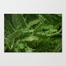 Entangled Fern Canvas Print