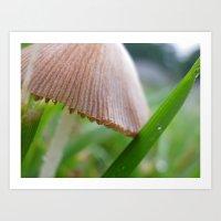 mushroom Art Prints featuring mushroom by Dottie