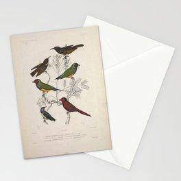 Poephile Admirable (Fr),  Dicee Bronze (Fr),  Myzomele De Lafarge (Fr),  Neochmie Phaeton (Fr),  Myzomele Solitaire (Fr)4 Stationery Cards