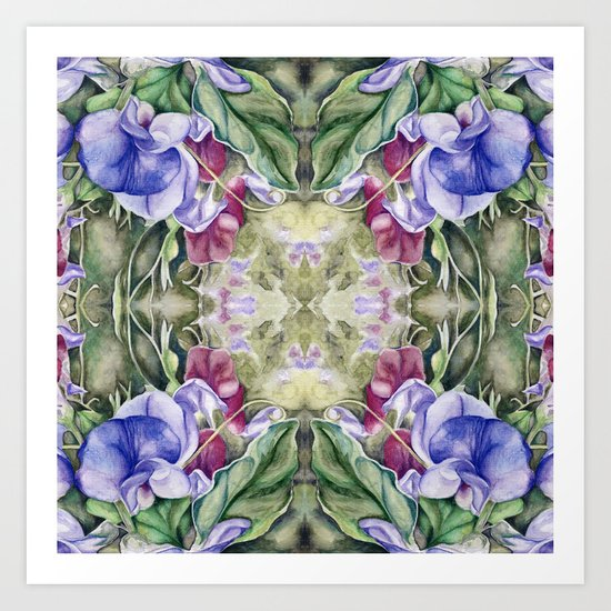 Lathyrus 5 Art Print