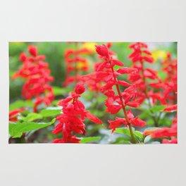 Salvia Rug