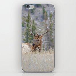 Elk shedding their antlers in Jasper National Park iPhone Skin