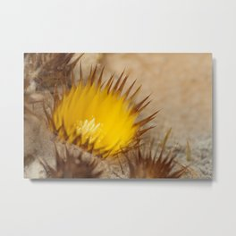 Desert Flower 159 Metal Print