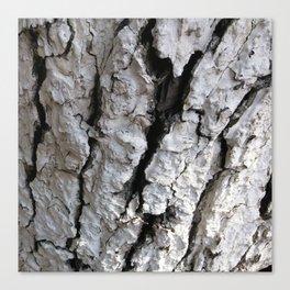 bark abstact no3 Canvas Print