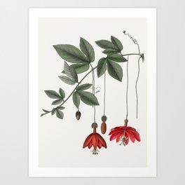 Banana Passionfruit Art Print