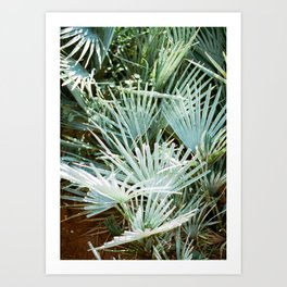 """Travel photography """"Morocco green"""" 