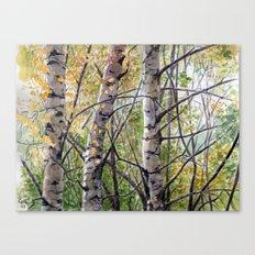 Birches A082 Canvas Print