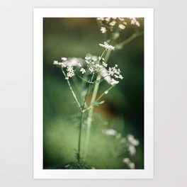 Cow parsley in the meadow Art Print