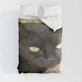 Beautiful Black Cat Portrait  Comforters