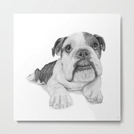 A Bulldog Puppy Metal Print