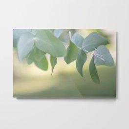 Eucaliptus Metal Print